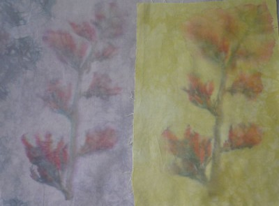 dudphototransfers