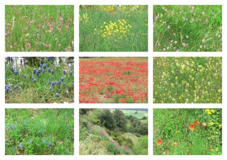 Pyrenees Wildflowers Collage