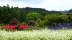 A Garden Day