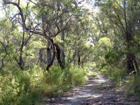 Finchs Line walk, Hawkesbury River