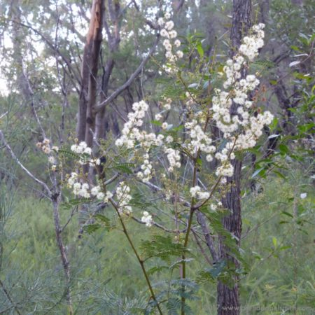 Australian native flowers