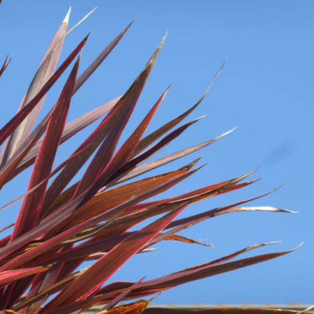 Week 51 - Weekly Art Project -Cordyline
