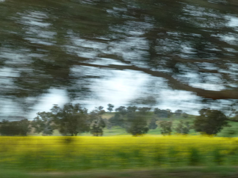 Canola Country Inspiration
